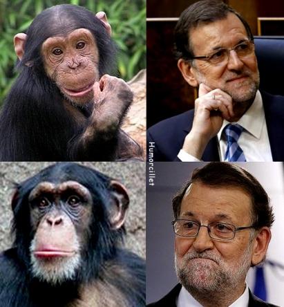 rajoy-chimpance-bo