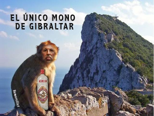 único mono