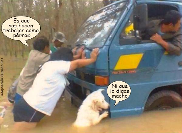 perro furgoneta