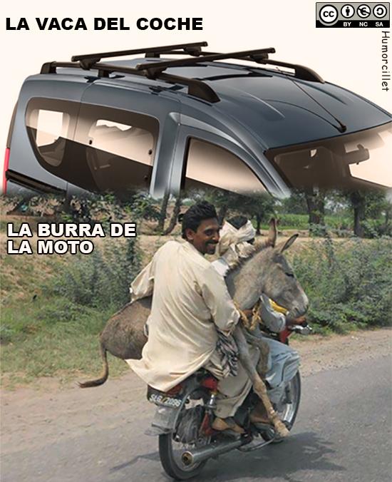 vaca coche