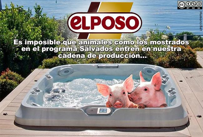 cerdos jacuzzi