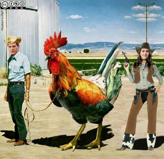 montando pollos